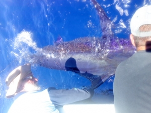 Blue Marlin Fishing Exmouth
